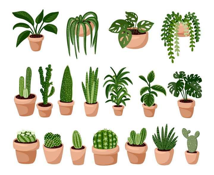 各种各样的绿萝仙人掌等盆栽植物图片免抠矢量素材