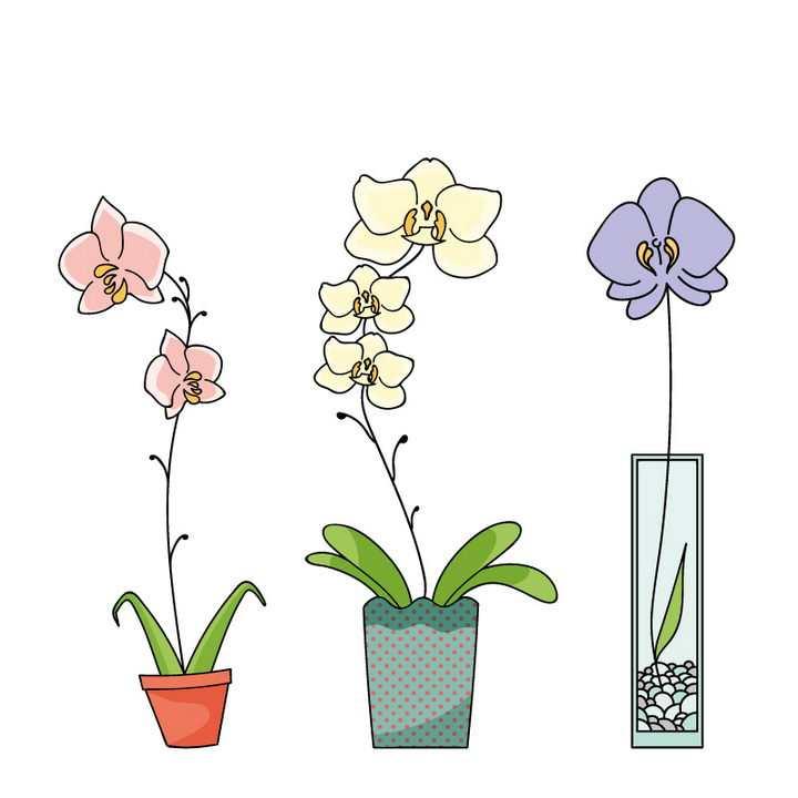 3款手绘风格栽种在花盆中的蝴蝶兰花朵花卉图片免抠矢量素材