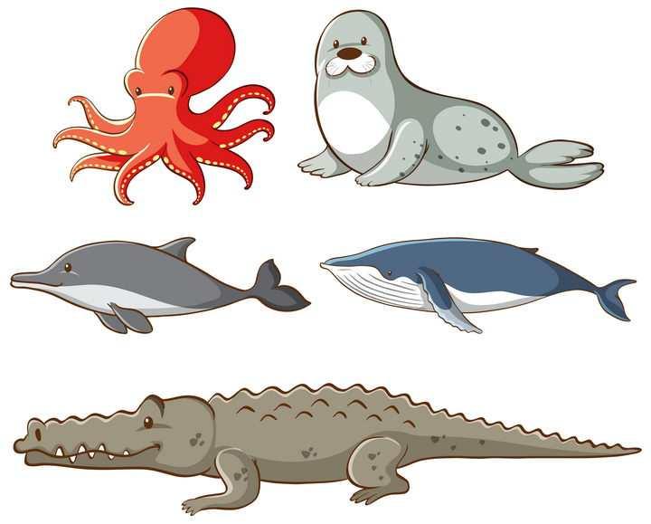 卡通章鱼海豹海豚蓝鲸和鳄鱼等野生海洋动物图片免抠矢量图素材