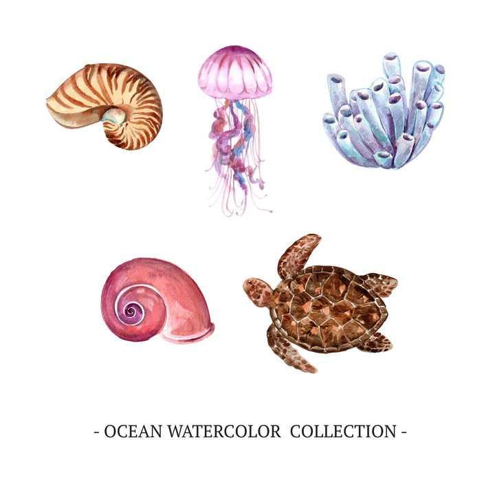 水彩画风格鹦鹉螺水母海绵海螺海龟等海洋动物图片免抠矢量素材