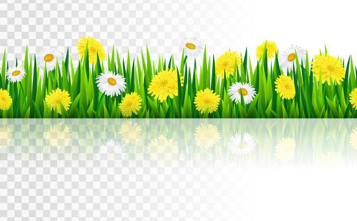 盛开了白色黄色金盏花花朵的绿色草丛图片免抠矢量素材
