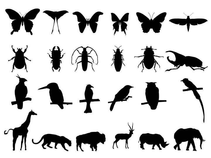 24款各种蝴蝶甲虫鸟儿大象等野生动物剪影图片免抠矢量素材