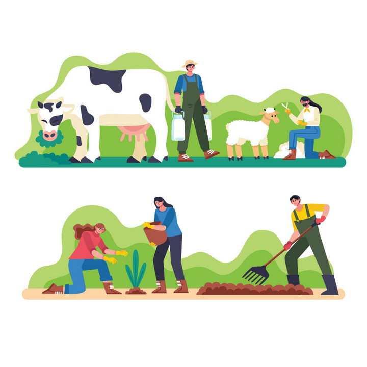 2款扁平插画风格挤牛奶剪羊毛耕田的农民农夫图片免抠矢量素材