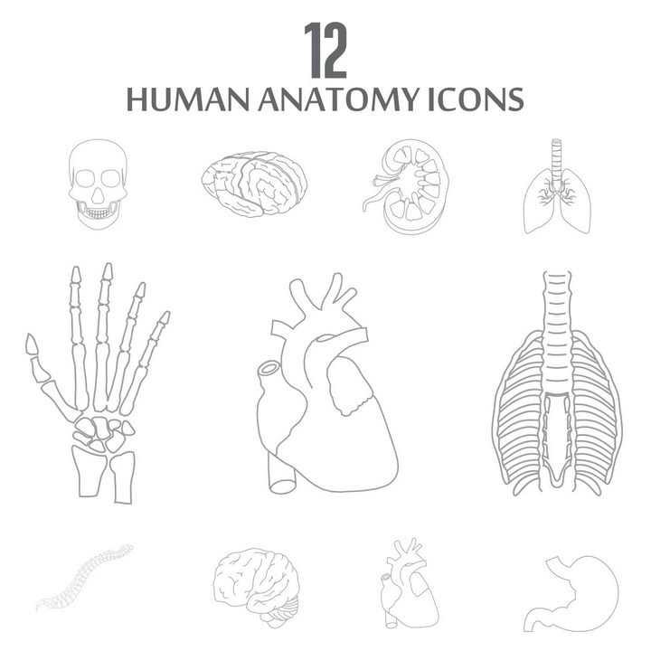 线条风格人体器官组织骨骼图片免抠素材