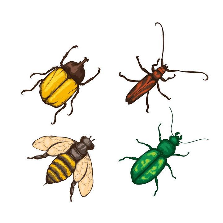 独角仙天牛蜜蜂等昆虫图片免抠矢量素材