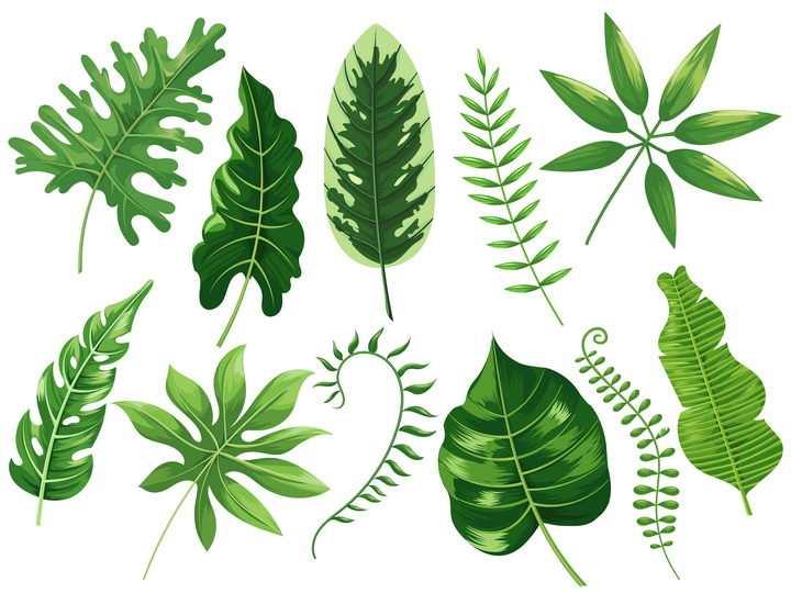 各种不同形状大小的热带雨林中的绿色树叶图片免抠矢量图
