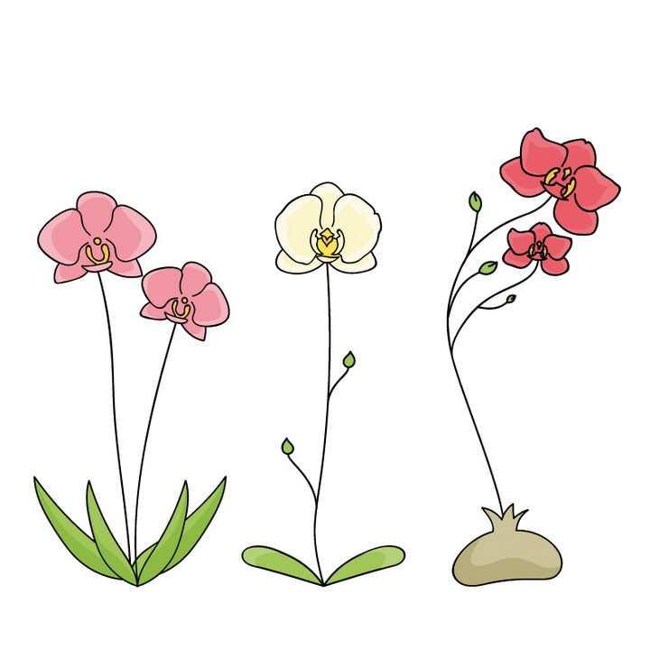 手绘彩色线条风格蝴蝶兰花朵花卉图片免抠矢量素材