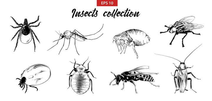 手绘素描蜘蛛蚊子蜱虫苍蝇蟑螂等害虫图片免抠矢量素材
