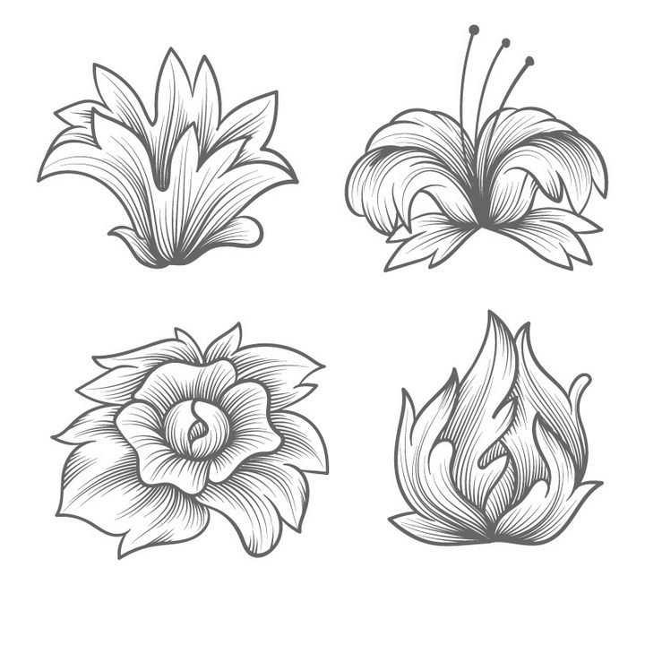 4款手绘线条素描风格百合花花朵花卉图案图片免抠矢量图素材