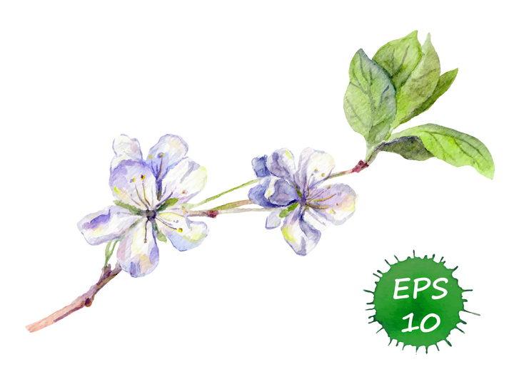 水彩画风格枝头上的紫色白色桃花梅花图片免抠矢量素材 生物自然-第1张