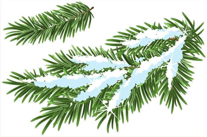 有积雪的松叶松枝图片免抠矢量素材