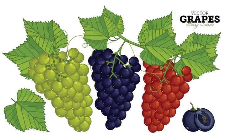 绿色紫色和红色的手绘葡萄提子美味水果图片免抠矢量素材