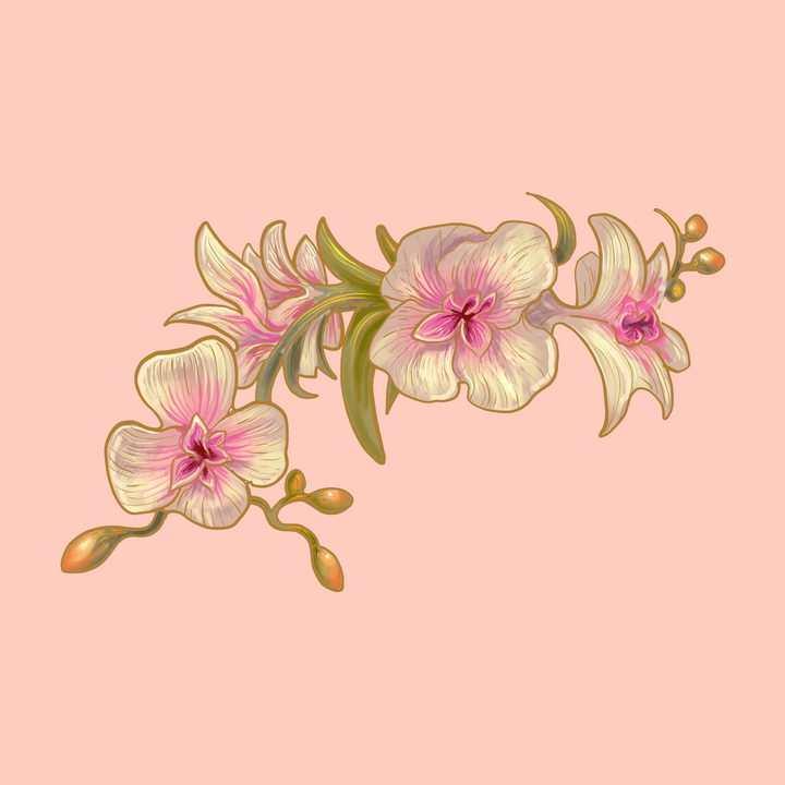 手绘风格的某种兰花花卉花朵图片免抠矢量素材