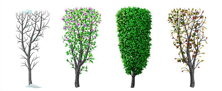 春夏秋冬四季树木的发芽生长落叶的情况图片免抠矢量素材