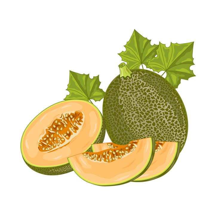 手绘风格切开的哈密瓜美味水果图片免抠矢量素材