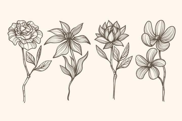 4款素描风格玫瑰花百合花花朵图片免抠矢量图素材