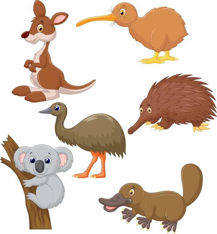 卡通袋鼠考拉鸭嘴兽几维鸟等澳大利亚大洋洲野生动物图片免抠素材
