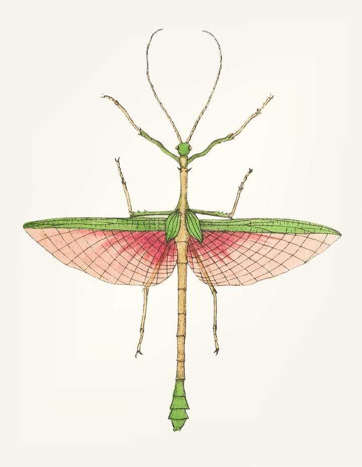 野生动物昆虫竹节虫图片免抠素材
