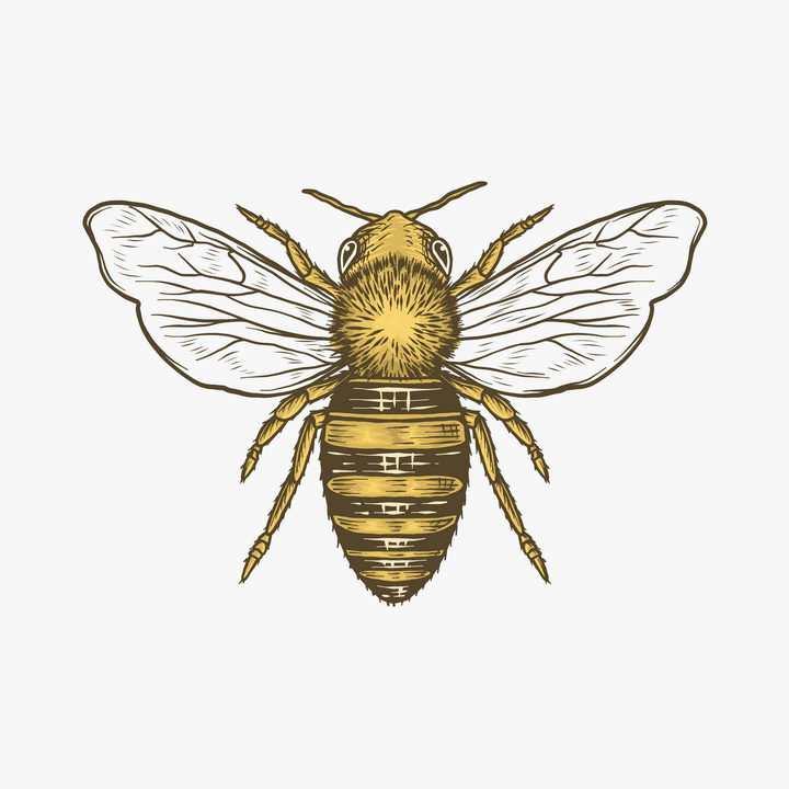 彩绘风格蜜蜂小昆虫免抠矢量图素材