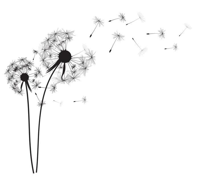 吹散的蒲公英花朵和飞舞的蒲公英花絮黑色剪影图片免抠矢量素材 生物自然-第1张