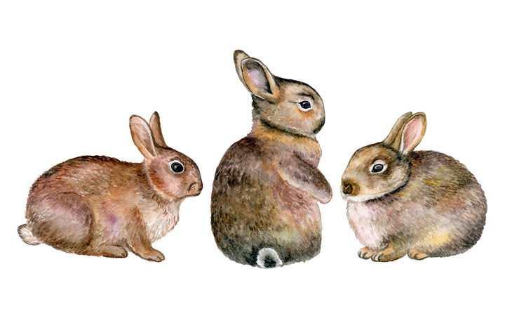 3款彩绘风格可爱的小兔子野兔图片免抠矢量素材