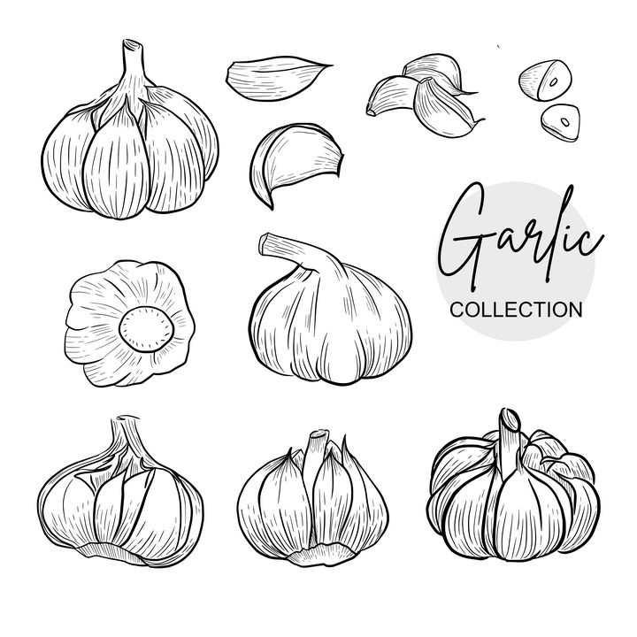 手绘线描风格大蒜蒜头蒜瓣蔬菜图片免抠矢量素材