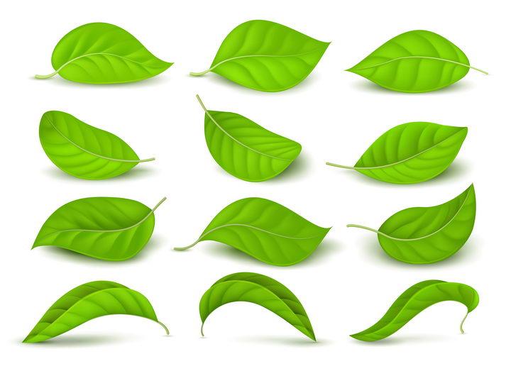 12款逼真的绿油油的树叶图片免抠矢量素材 生物自然-第1张
