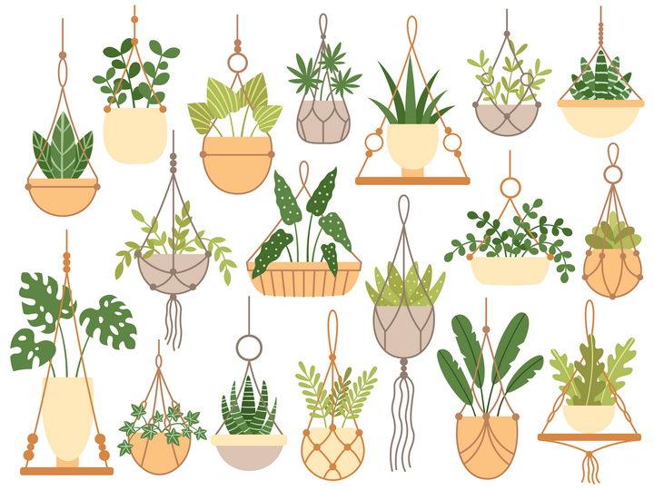 各种扁平化风格吊兰花卉绿植图片免抠矢量图 生物自然-第1张