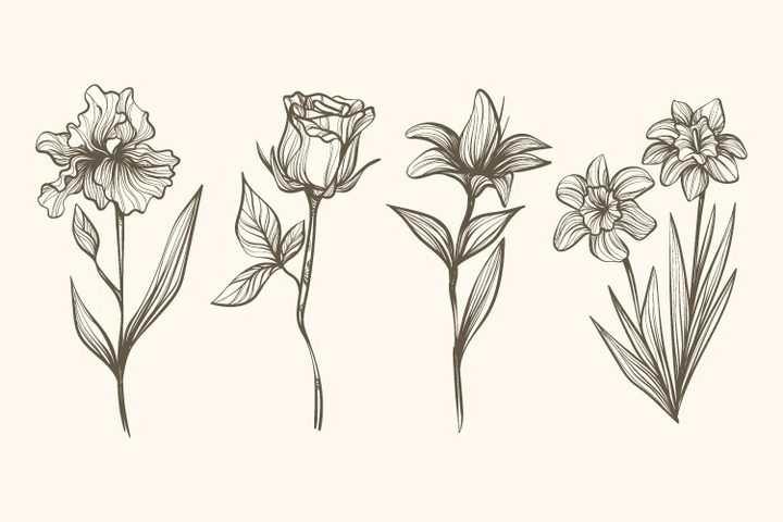 4款素描风格百合花花朵图片免抠矢量图素材
