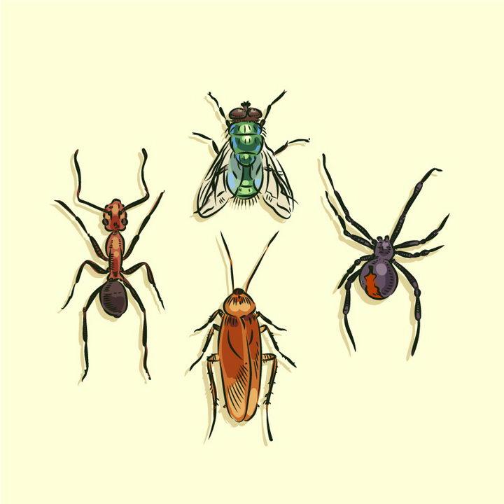 水彩画风格蚂蚁苍蝇蜘蛛和蟑螂等昆虫图片免抠矢量素材