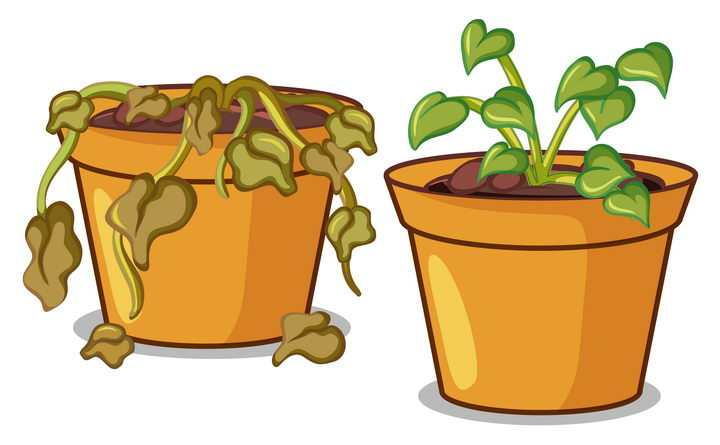 两盆绿植花卉其中一盆已经枯萎了图片免抠矢量图素材