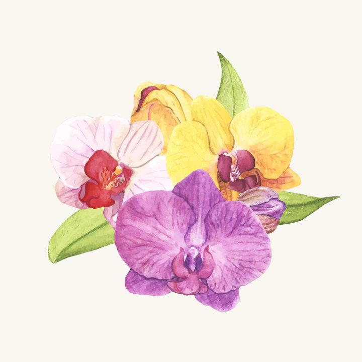 水彩画风格紫色黄色和粉色蝴蝶兰花朵花卉图片免抠矢量素材 生物自然-第1张
