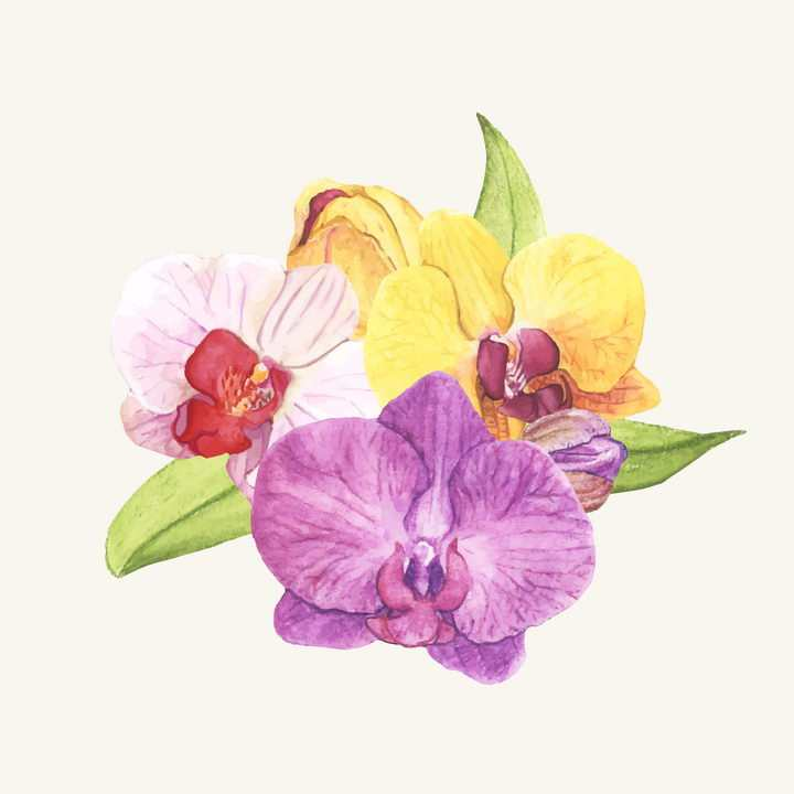 水彩画风格紫色黄色和粉色蝴蝶兰花朵花卉图片免抠矢量素材