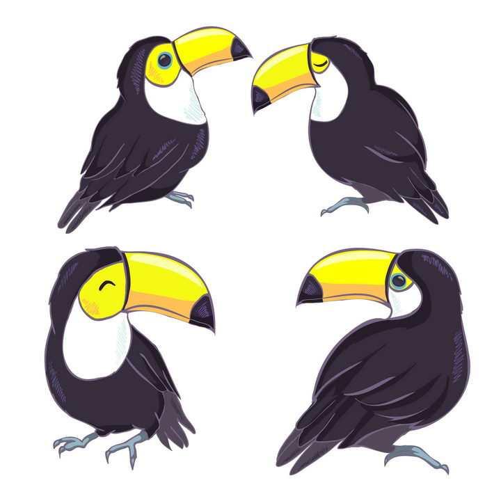4种手绘风格巨嘴鸟图片免抠矢量素材