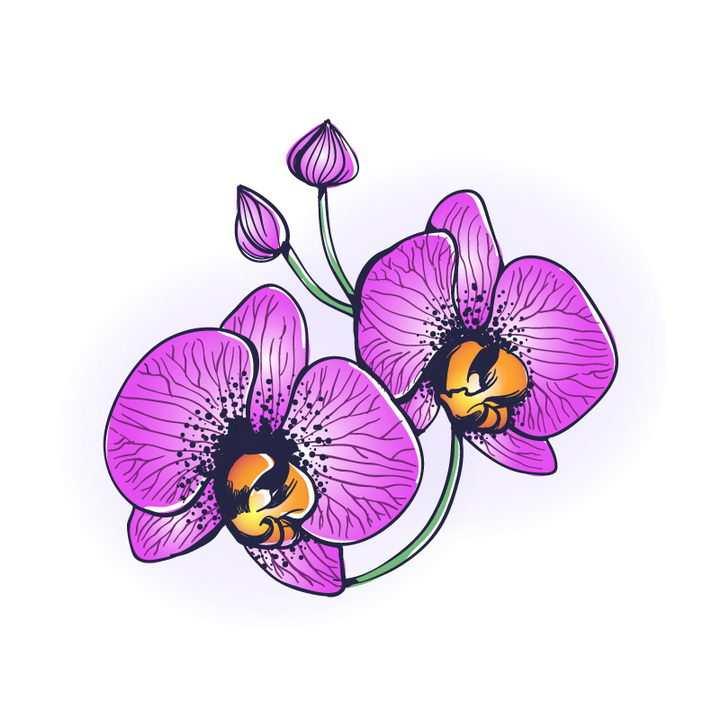 手绘风格紫红色蝴蝶兰花朵花卉图片免抠矢量素材