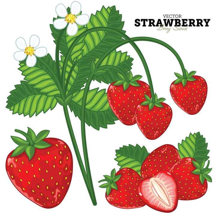 美味水果草莓和草莓花朵叶子图片免抠矢量素材