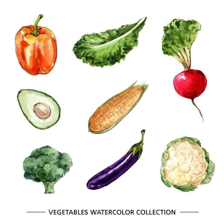 水彩画风格灯笼椒生菜萝卜牛油果玉米棒西兰花茄子花菜等蔬菜图片免抠矢量素材