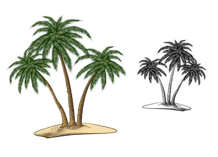 黑白和彩绘风格的热带海岛上的椰子树免抠矢量图素材