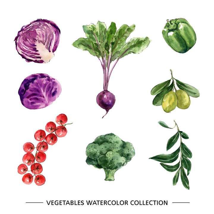 水彩画风格紫甘蓝红萝卜青椒枸杞包菜等蔬菜图片免抠矢量素材