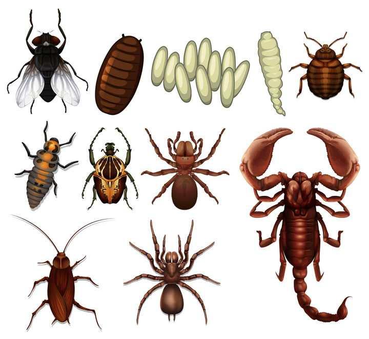 苍蝇虫卵蟑螂蜘蛛蝎子等害虫有害昆虫图片免抠矢量素材