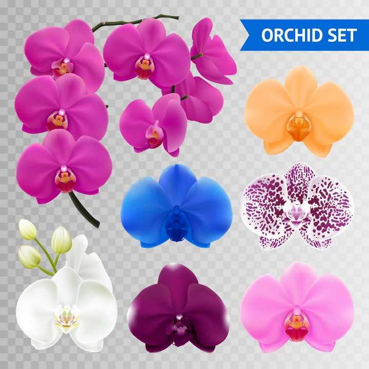 各种品种的蝴蝶兰花朵花卉图片免抠矢量素材
