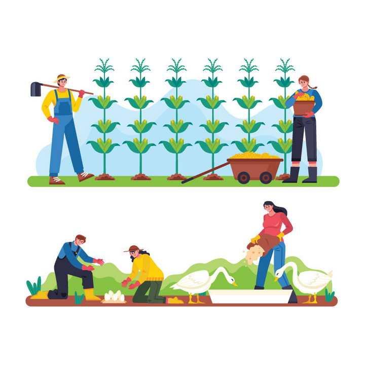 2款扁平插画风格种玉米养家禽的农民农夫图片免抠矢量素材