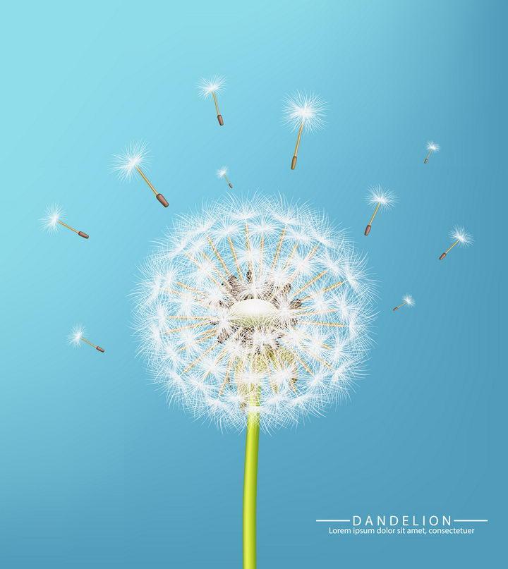 逼真的白色蒲公英花朵和飞舞的蒲公英花絮图片免抠矢量素材 生物自然-第1张