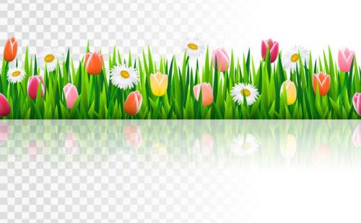 盛开了白色金盏花和粉色郁金香花朵的绿色草丛图片免抠矢量素材