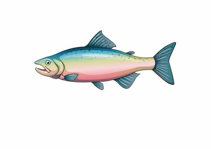 一只三文鱼大马哈鱼鲑鱼美味海鲜海产品png图片免抠矢量素材
