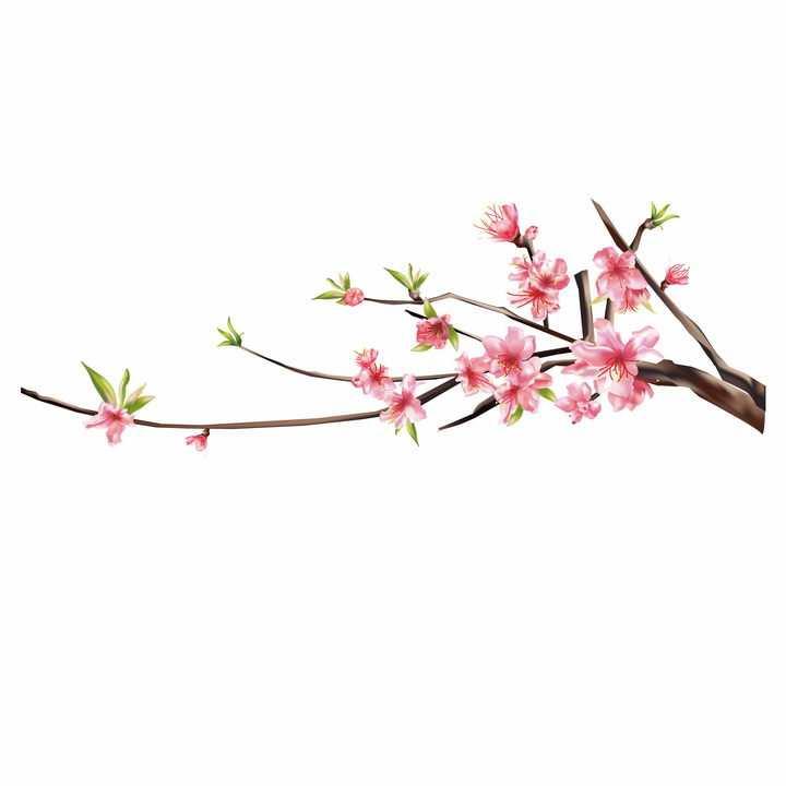 春天枝头盛开的桃花和树叶png图片免抠素材