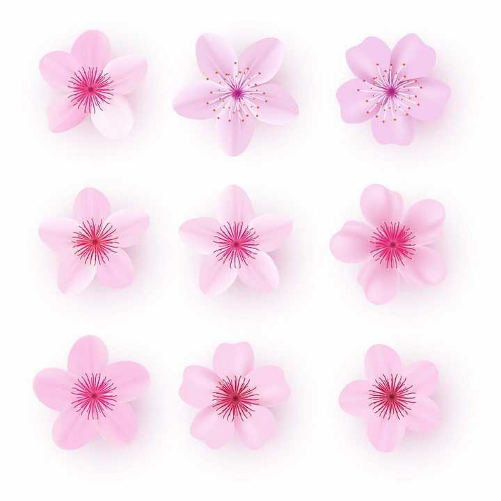 9款粉红色的桃花花朵花瓣png图片免抠矢量素材