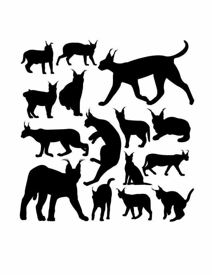 各种狞猫非洲野生动物猫科动物剪影png图片免抠矢量素材