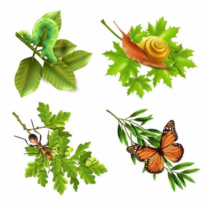 树叶上的毛毛虫蜗牛蚂蚁和蝴蝶等小昆虫png图片免抠矢量素材