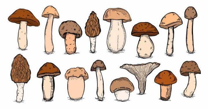 各种各样的手绘蘑菇香菇美味美食png图片免抠矢量素材